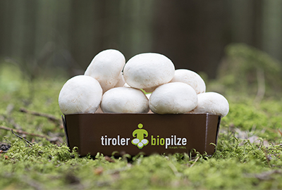 Bio Pilze aus Tirol